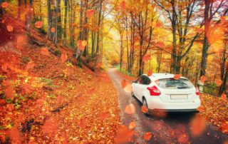 A white car is covered by fall leaves , as they drive through a road in Old Saybrook, CT