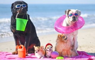 Pets chill on Harvey Beach during a lovely pet-friendly visit to Old Saybrook, CT.